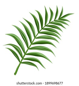 3d realistic vector palm branch, isolated on white background.