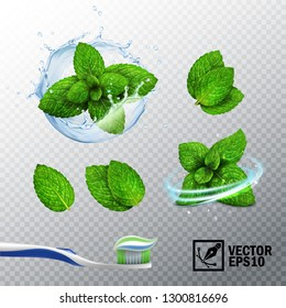 3D realistic vector set, transparent splash of water with a mint sprout, various options for mint leaves, a fresh whirlwind, a toothbrush with a paste