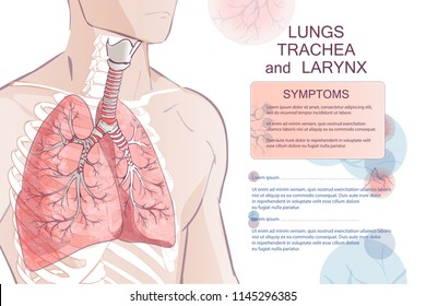 3d vector of the human Respiratory System (Lungs Inside) larynx nasal throttle anatomy. Man body parts. Hand drown sketch illustration