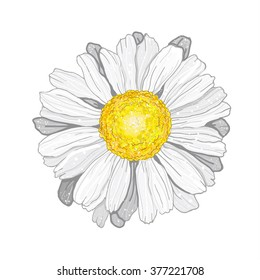 3D vector Illustration chamomile.Beautiful white flower isolated.For greeting cards and invitations of wedding,birthday,mother's day,holiday.Vector plant on background.Cloth design,wallpaper,wrapping.