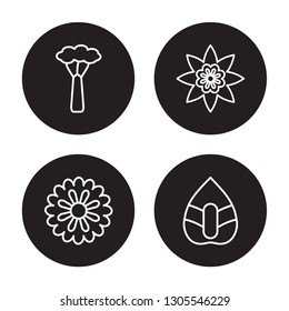 4 linear vector icon set : Baobab, Aster, Astrantia, Anthurium isolated on black background, Baobab, Aster, Astrantia, Anthurium outline icons