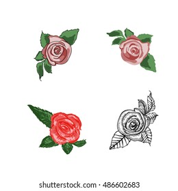 4 types of roses hand drawn color pink