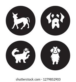 4 vector icon set : Mexican Hairless Dog dog, Maltipoo Mastiff Maltese dog isolated on black background