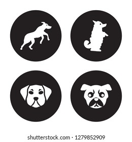 4 vector icon set : Rhodesian Ridgeback dog, Puggle Pumi Pug dog isolated on black background