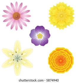 5 detailed vector flowers