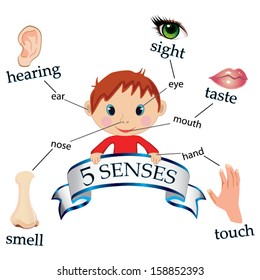 5 senses educational concept vector