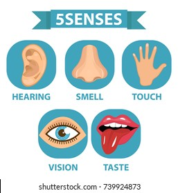 5 senses icon set. Touch, smell, hearing, vision, taste. Isolated on white background. Vector illustration
