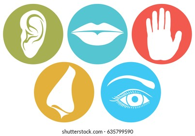 5 senses: smell, touch, hearing, taste and sight (nose, lips, eye, ear and hand)