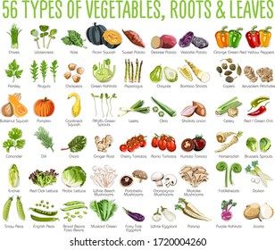 56 Vegetables icons - This collection includes 56 icons of colorful Vegetables roots and leaves
