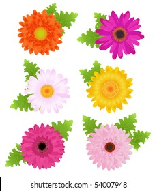 6 Colorful Daisies (Orange, Pink, Magenta, Yellow) With Leaves, Isolated On White
