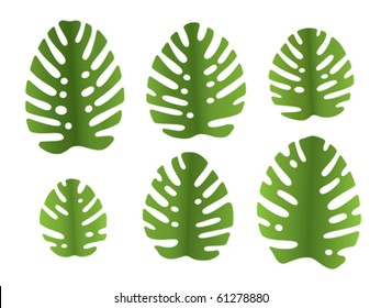 6 different vector leaves of monstera plant