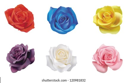 6 red yellow blue pink white purple realistic color roses flower flora icon collection set in isolated background, create by vector