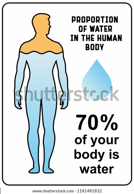 70 Percent Your Body Water Vector Stock Vector Royalty Free 1181481832
