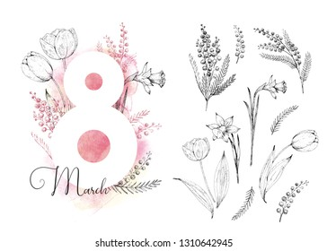 8 march. International Women's Day. Vector card. Watercolor background. Hand drawn illustration in engraving style. Spring vintage flowers: tulips, narcissus and mimosa. Set of isolated sketch flowers
