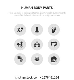 9 round vector icons such as human with focus on the lungs, immune system, kneecap, large intestine, lungs with the trachea contains male and female gender, male head side view with brains, male
