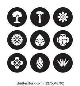 9 vector icon set : Beech, Baobab, Alstroemeria, Anemone, Anthurium, Astrantia, Aster, Almond isolated on black background