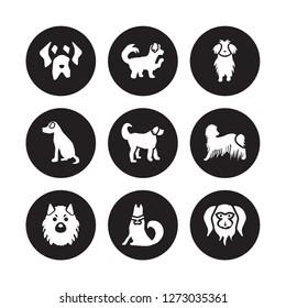 9 vector icon set : Mastiff dog, Maltipoo Keeshond Komondor Labradoodle Maltese Vizsla Jindo dog isolated on black background