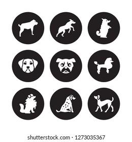9 vector icon set : Rottweiler dog, Rhodesian Ridgeback Pomeranian Poodle Pug Pumi Puggle Pointer dog isolated on black background