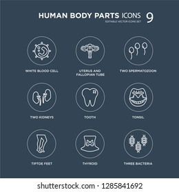 9 White blood cell, Uterus and Fallopian tube, Tiptoe feet, Tonsil, Tooth, Two Spermatozoon, Kidneys, Thyroid modern icons on black background, vector illustration, eps10, trendy icon set.