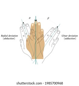 Abduction and adduction movements of the wrist joint - Shutterstock ID 1985700968