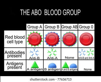 The ABO blood group diagram (useful for medical education and schools) - vector illustration