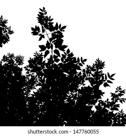 Abstract background with leaves silhouette of American Maple, black and white vector illustration