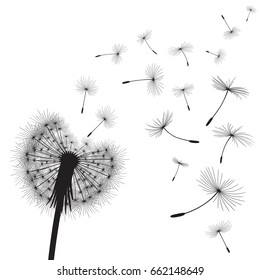 Abstract background with silhouette dandelion flower and seeds, vector illustration.