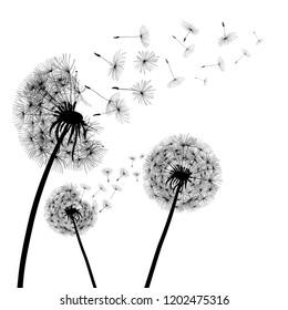 Abstract black dandelion, dandelion with flying seeds - vector