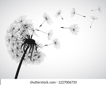 Abstract black dandelion, dandelion with flying seeds - vector for stock