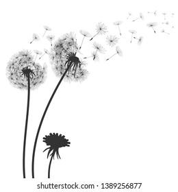 Abstract black dandelion, flying seeds of dandelion - for stock