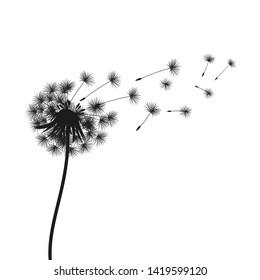 Abstract black dandelion, flying seeds of dandelion - vector for stock