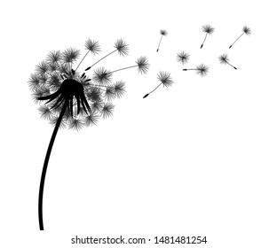 Abstract black dandelion silhouette, flying seeds of dandelion - stock vector