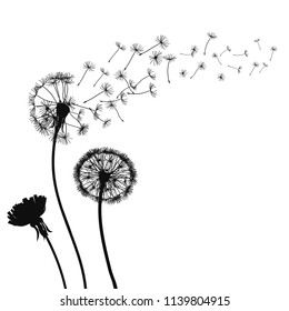 Abstract black Dandelions, dandelion with flying seeds – for stock