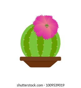 Abstract cute cactus