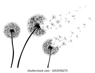 Abstract Dandelions dandelion with flying seeds – stock vector