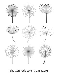 Abstract dandelions set in linear style, monochrome vector illustration set