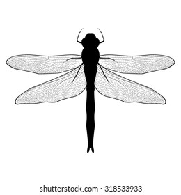 Abstract design dragonfly. Insect with wings. drawn dragonfly. Dragonfly isolated on white background. Vector illustration
