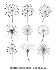 Abstract graphic dandelion collection in linear style, vector illustration set