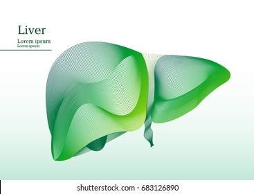Abstract green illustration of liver