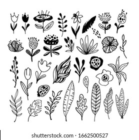 Abstract hand drawn doodle leaves, palm tree, flowers. Botanical design. Template design elements for background, pattern, banner. Flower set. Leaves set.