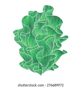 Abstract hand drawn illustration. Decorative design element. Water plant isolated on white. Vector seaweed.