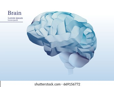 Abstract illustration of anatomical human brain
