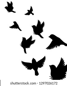 Abstract illustration of many sparrow bird flying up. Black silhouette. Bird fly to the top. Vector illustration on white background.