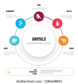 Abstract infographics of animals template. Boar, blindworm, Bird, Beetle, Zebra icons can be used for workflow layout, diagram, business step options, banner, web design.