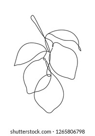 Abstract lemon fruit on branch. One line drawing
