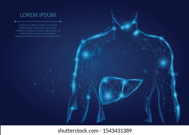 Abstract line and point human body with the liver. Healthcare, Science and Technology Vector Illustration