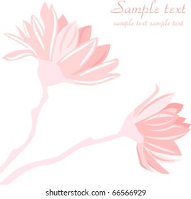 Abstract magnolia tree blossoms on white background