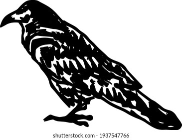 Abstract silhouette outline of blackbird. Lineart vector illustration.
