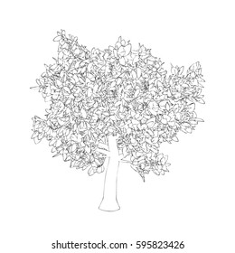 Abstract tree. Isolated on white background. Vector outline illustration.