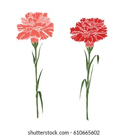 Abstract two carnations of red and pink. vector illustration